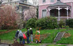 Planting a cherry tree on Kenyon Street