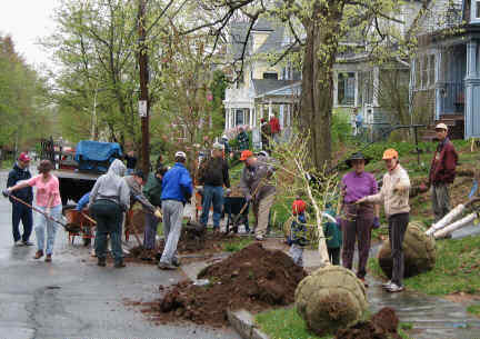 Twenty-four neighbors planting 4 trees on Kenyon Steet